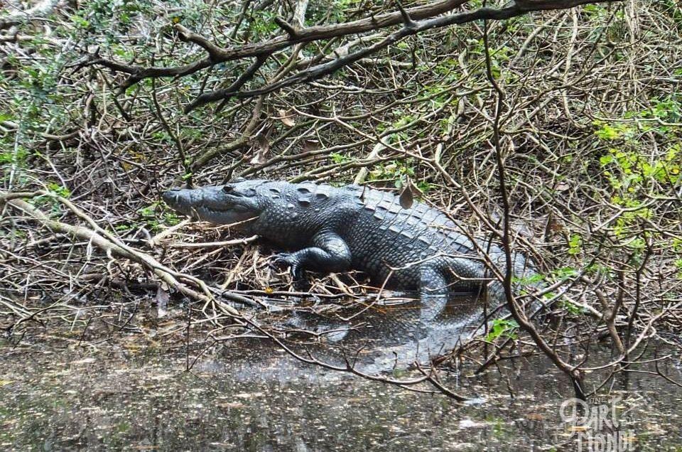 Mexique : découverte de la forêt de Calakmul et sa biosphère