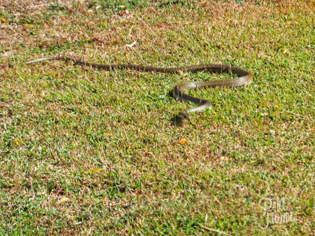 serpent-sigiriya