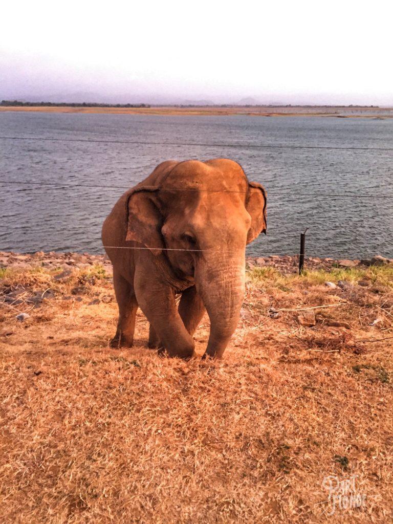 safari uda walawe éléphant sunrise