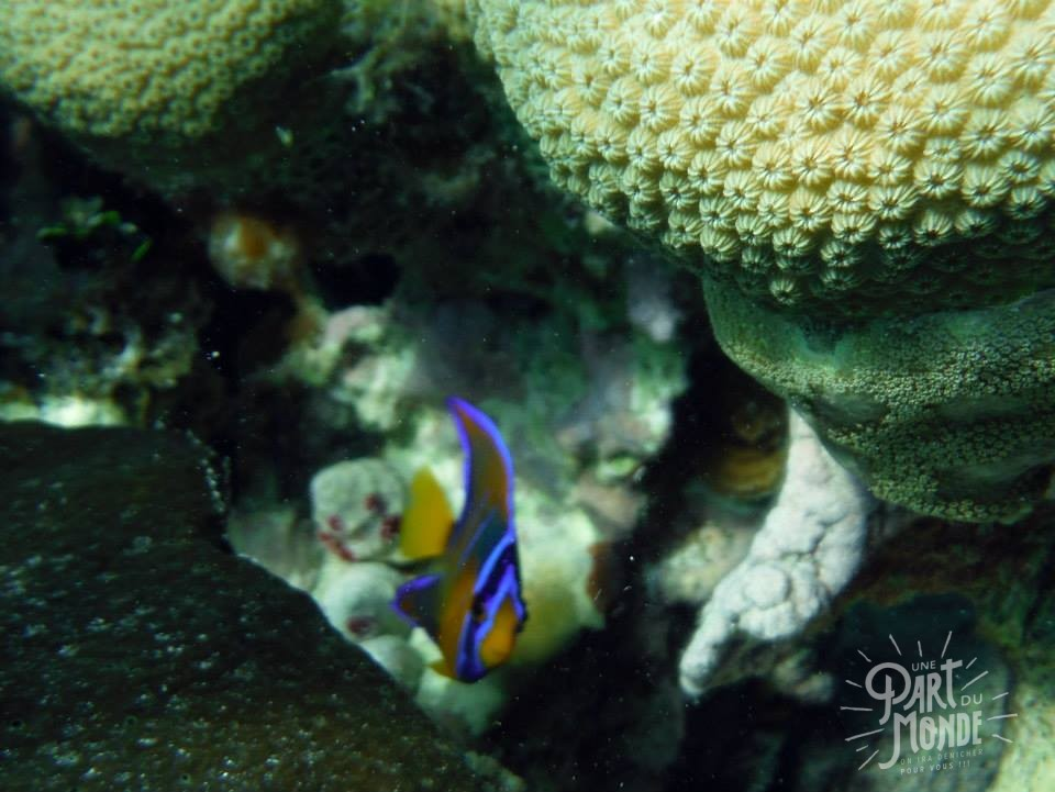 belize snorkeling poisson