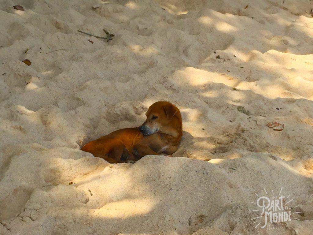 mirissa chien beach