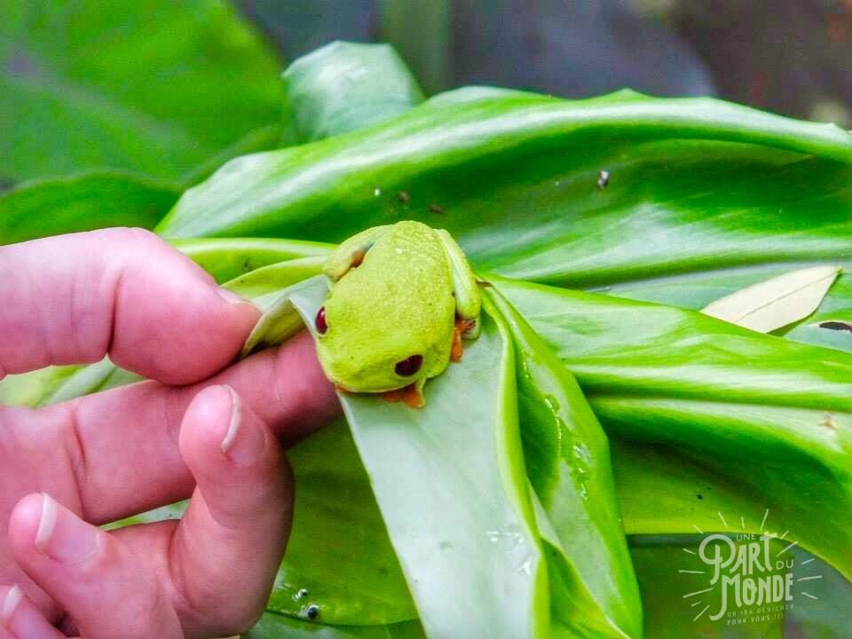 jagaur rescue center grenouille greenery
