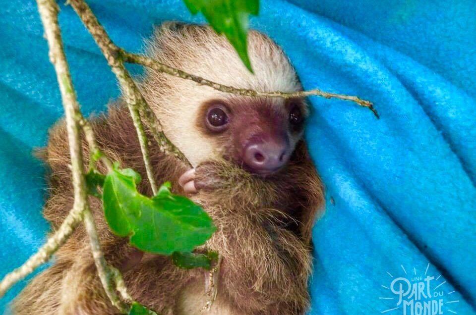 Costa Rica : Le Jaguar Rescue Center, centre de sauvetage d'animaux sauvages