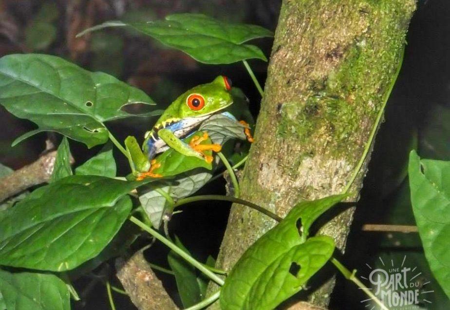 Costa Rica : Tortuguero après une escale à San José