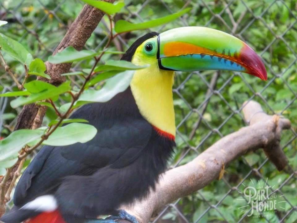 parc volcan tenorio toucan