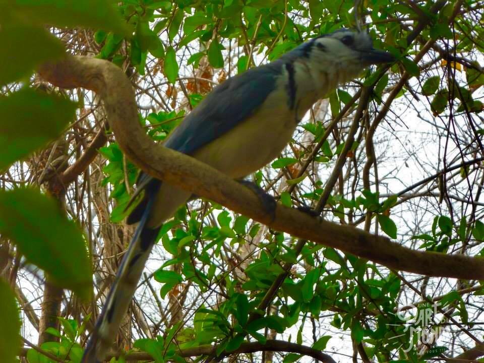barra honda oiseau