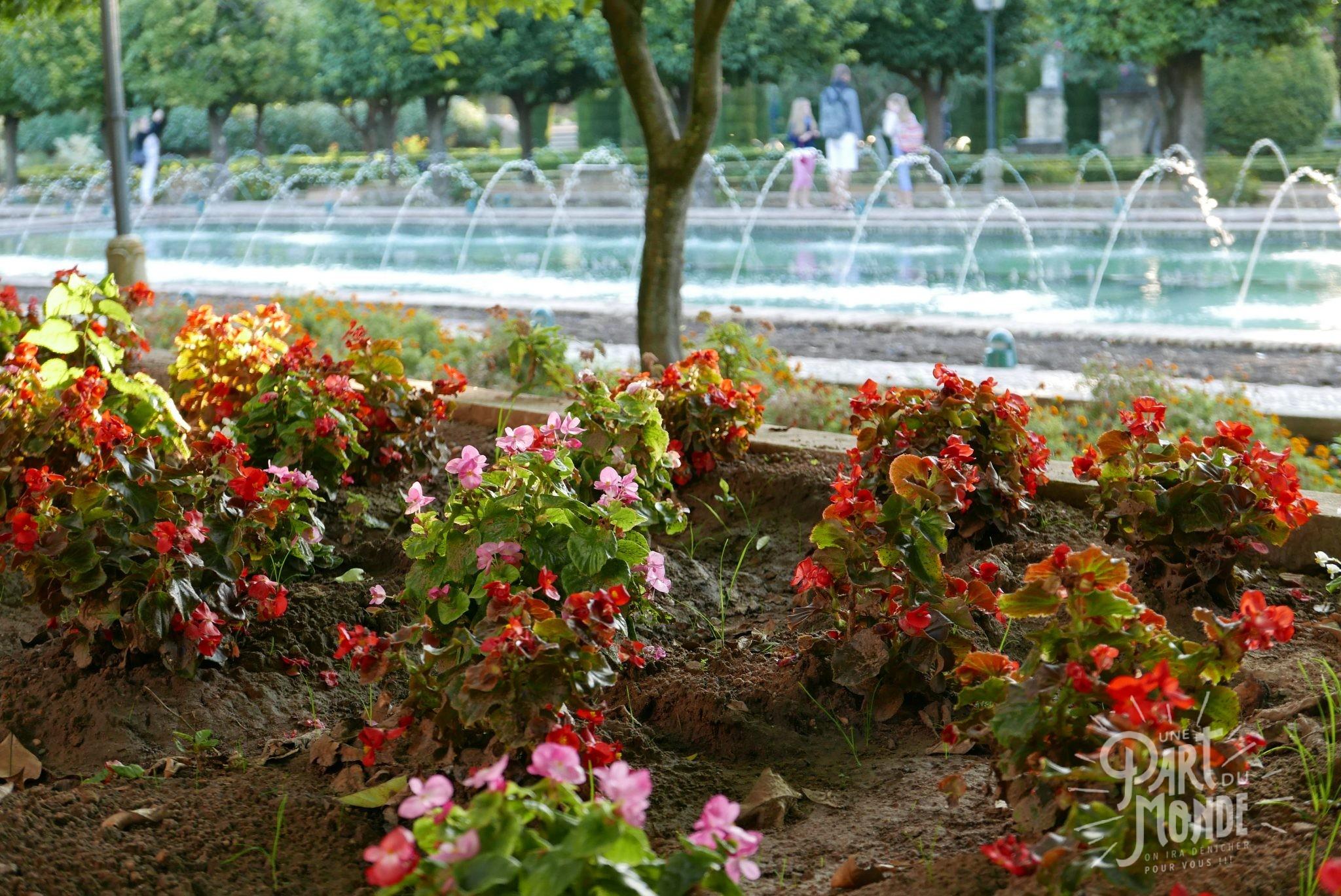 alcazar fleur cordoue