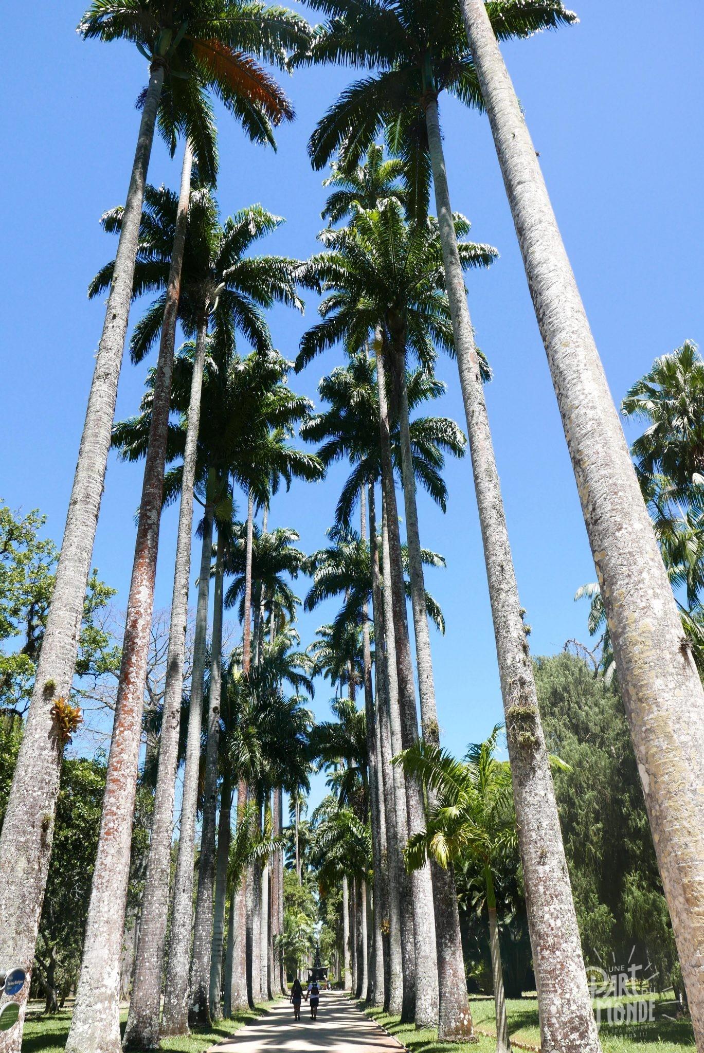 rio de janeiro côté nature jardin botanique palmiers