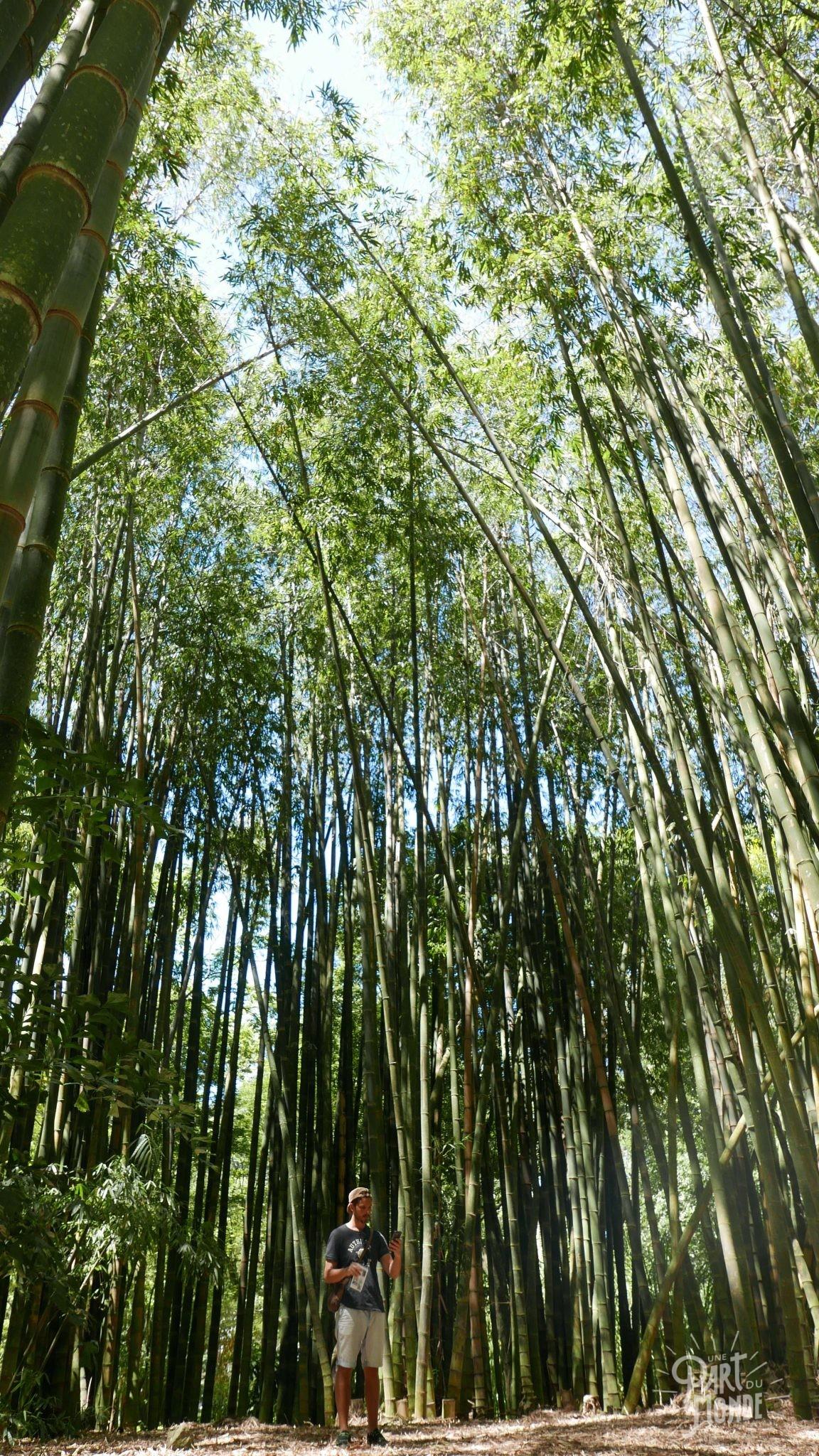 rio de janeiro côté nature jardin botanique bambou