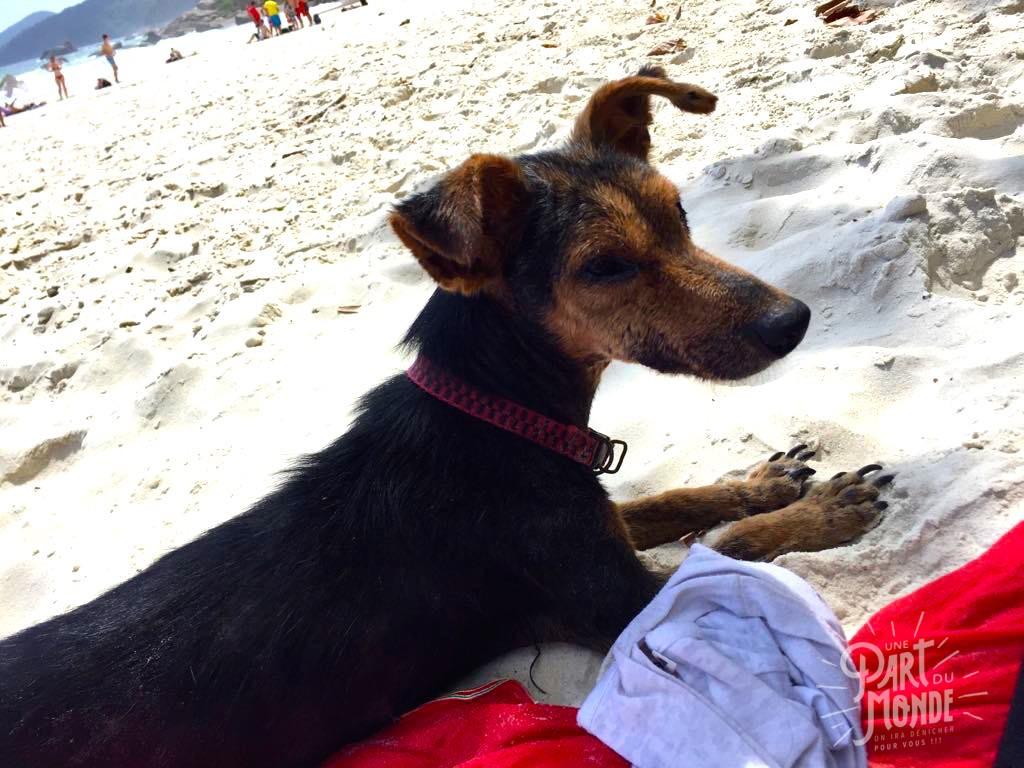 chien mascotte plage mendes lopes 2