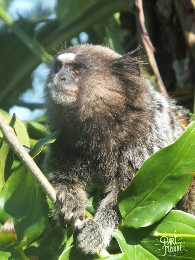 visiter rio de janeiro en 4 jours singe cristo redentor