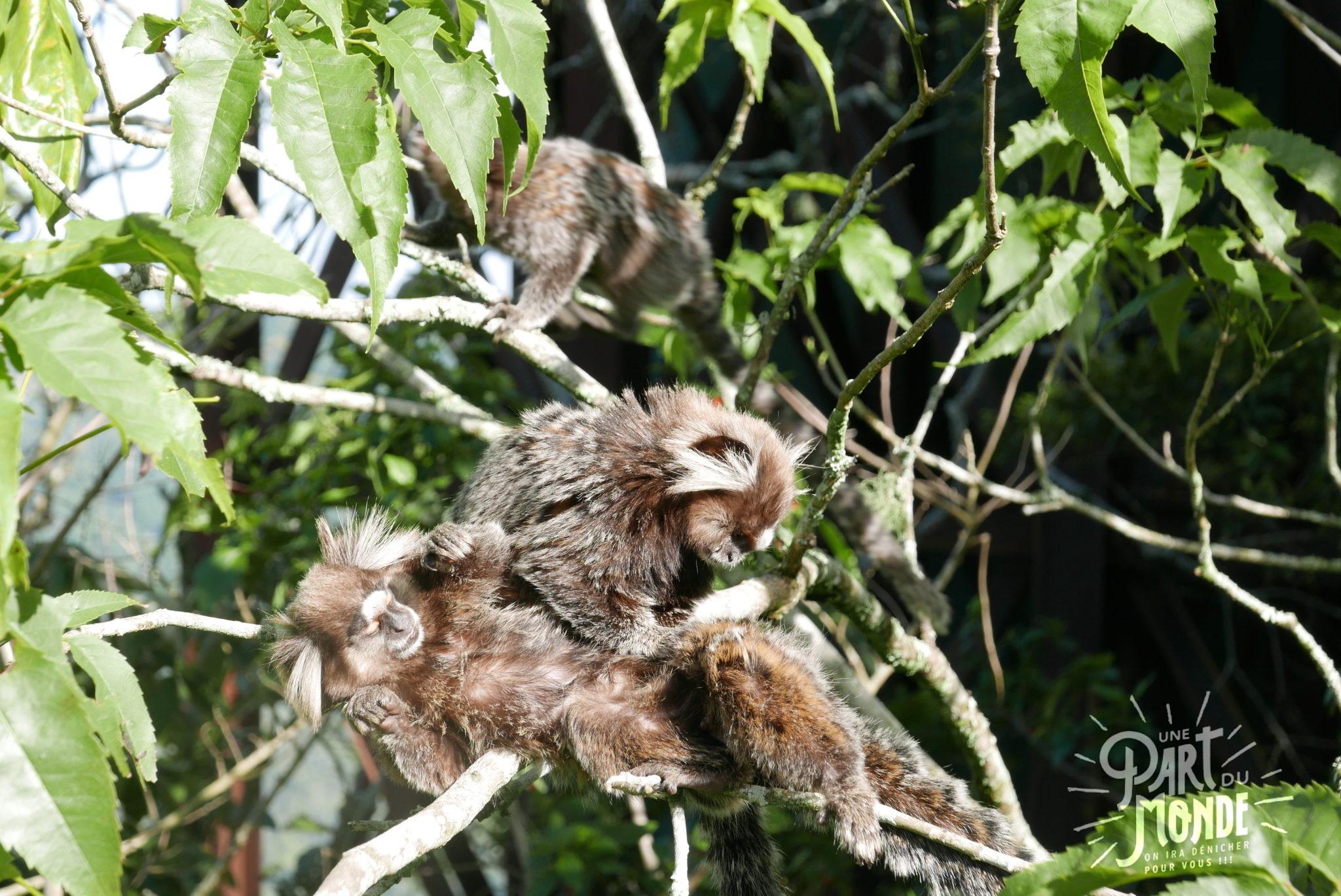 visiter rio de janeiro en 4 jours singe papouilles cristo redentor