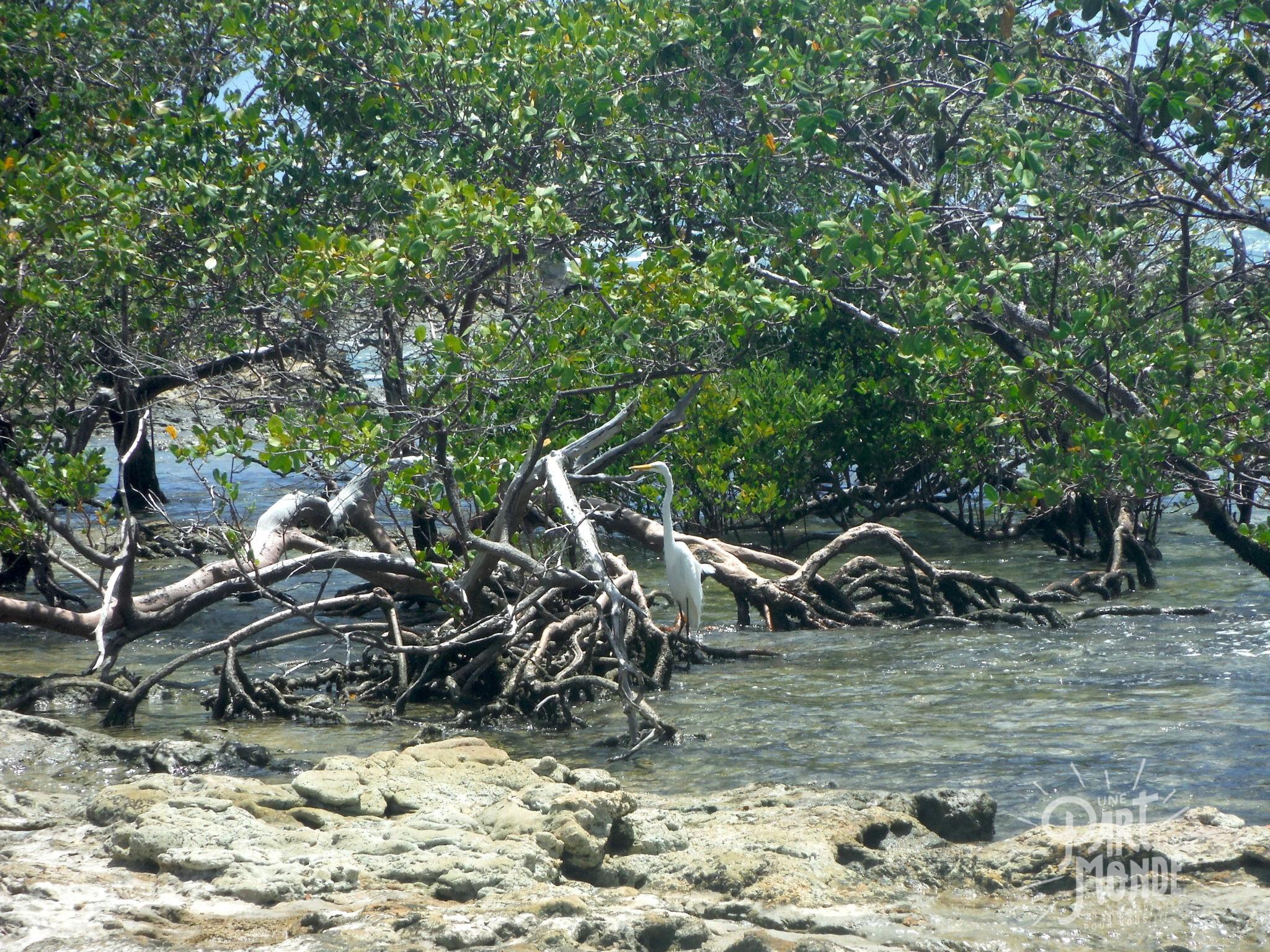 île de tinharé héron plage