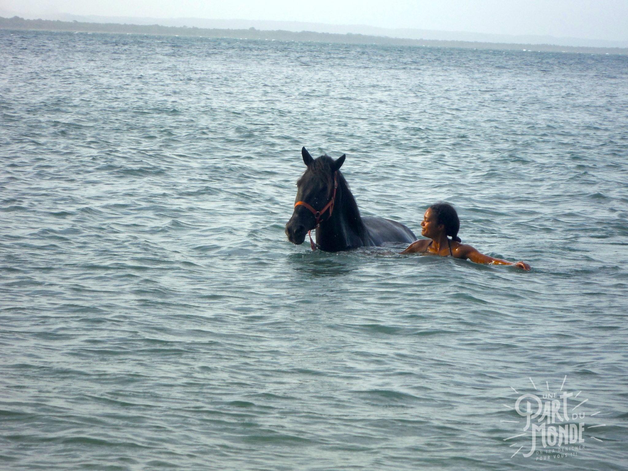 île de tinharé nage cheval