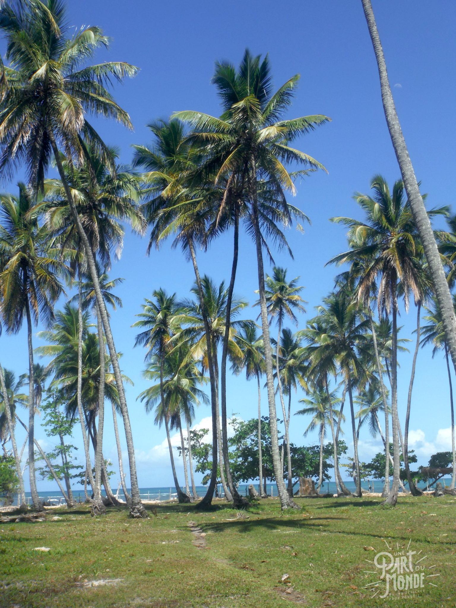palmier boipeba île de tinharé