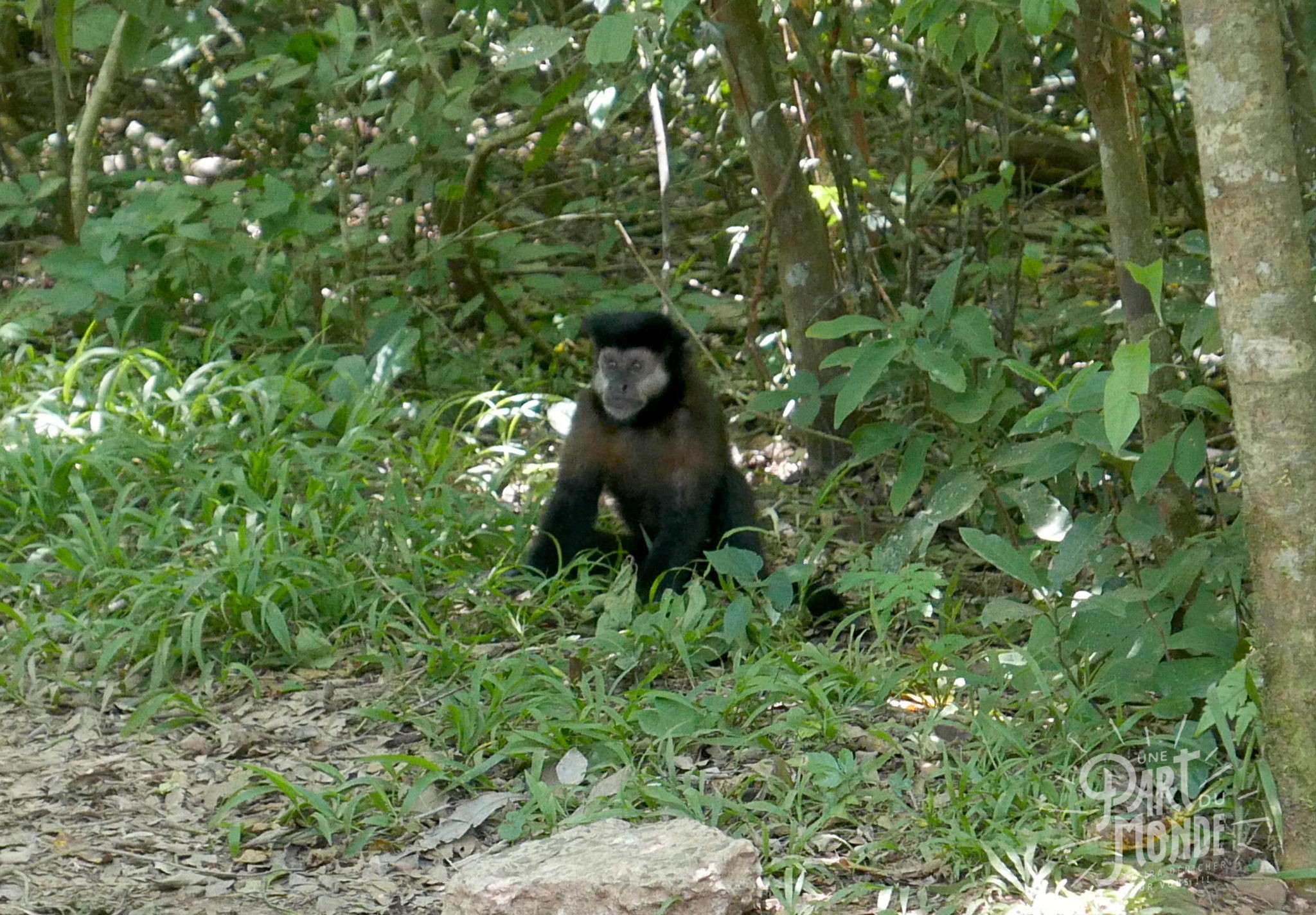 singe chutes d'iguazu côté argentin 2