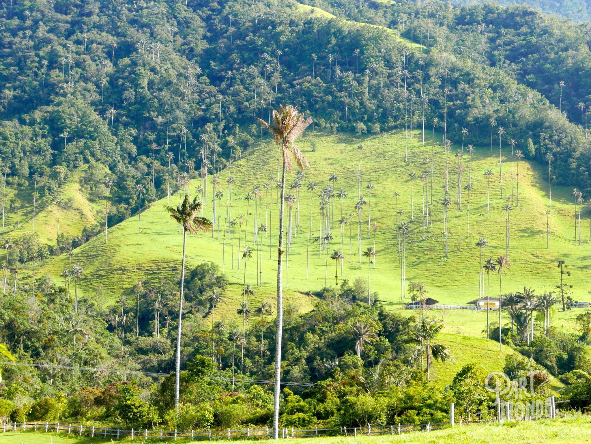 La Vallée de Cocora 7 mois de voyage