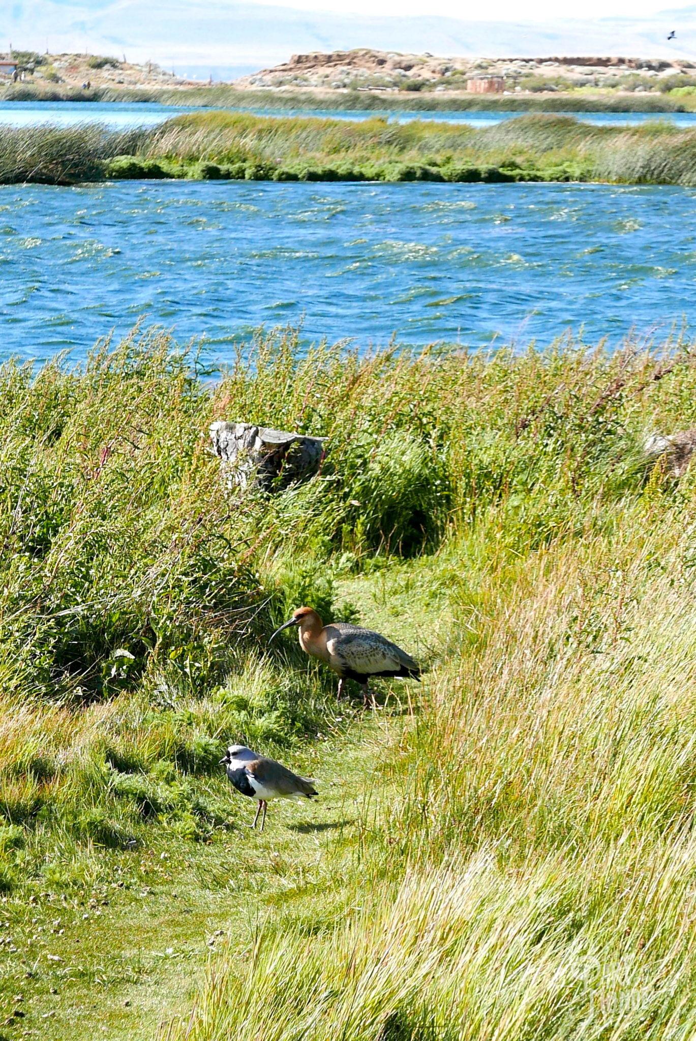 glacier perito moreno lagua nimez ibis