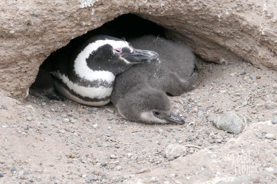 Péninsule de Valdès & faune de Patagonie : entre déception, galères et émerveillement