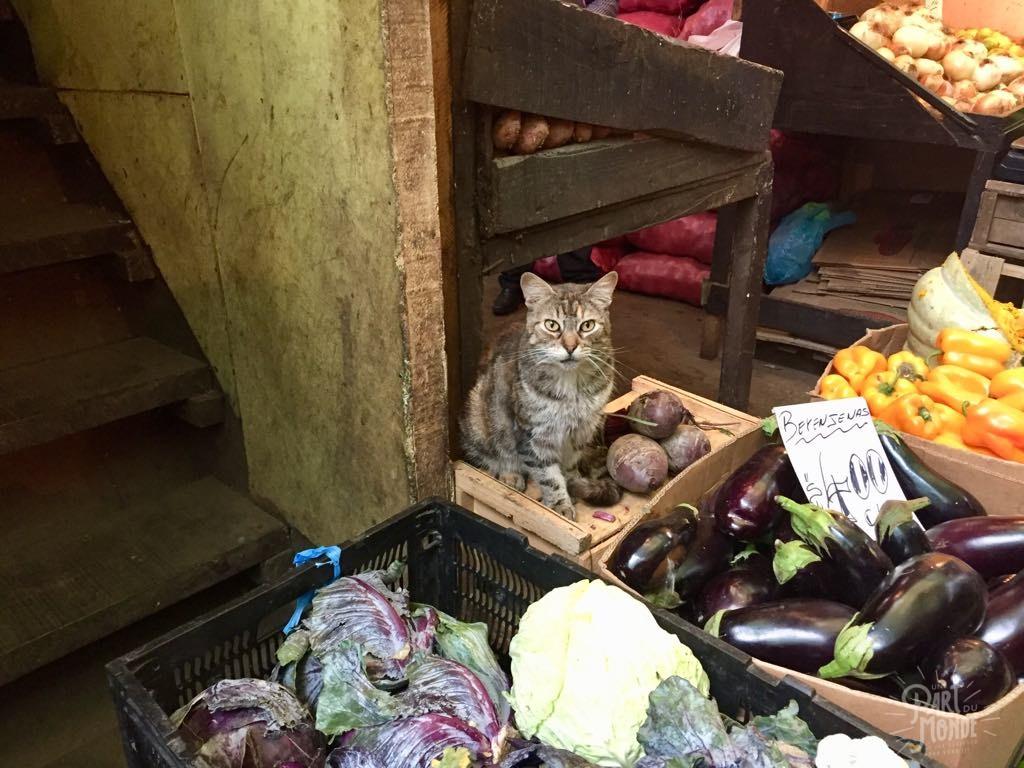 chat marché valpariso
