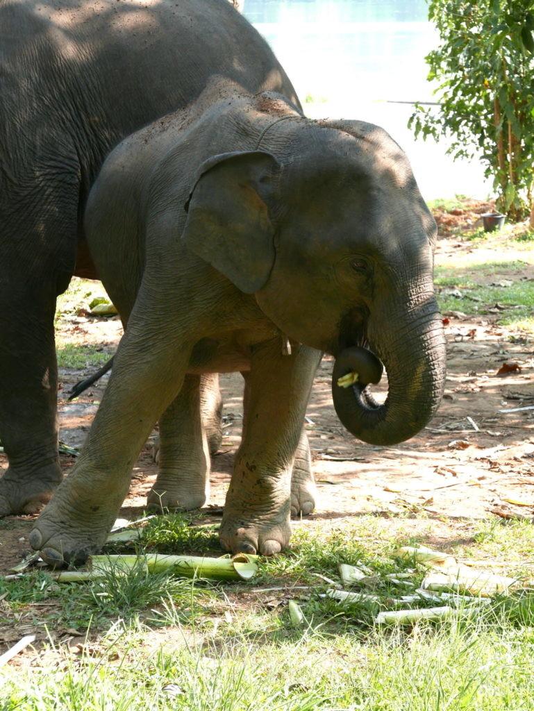 bébé elephant conservation center