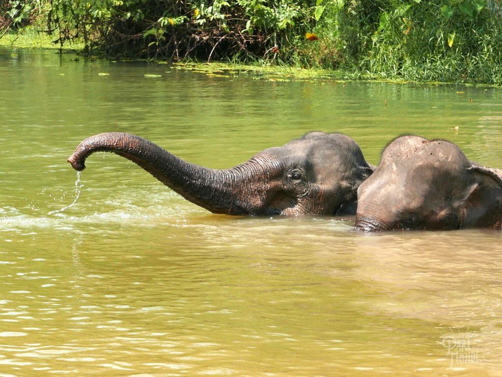 bain 2 elephant conservation center