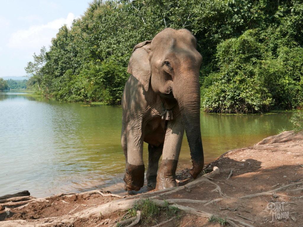 elephant adulte elephant conservation center