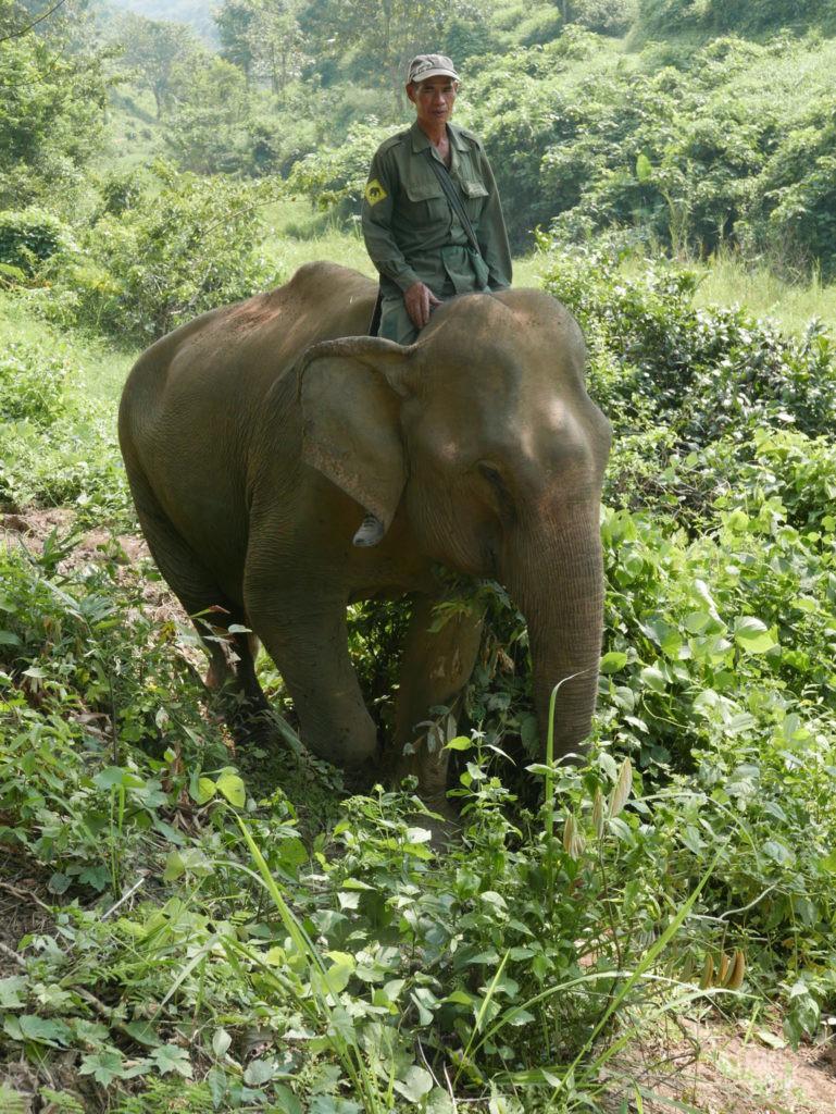 elephant et mahout elephant conservation center