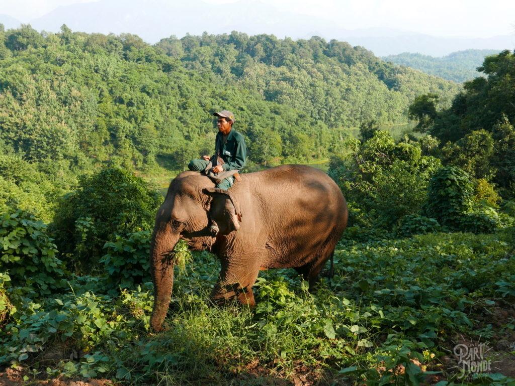 elephant foret elephant conseravtion center