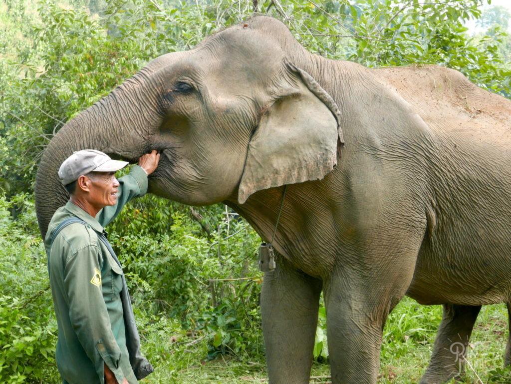 nourissage elephant conservation center