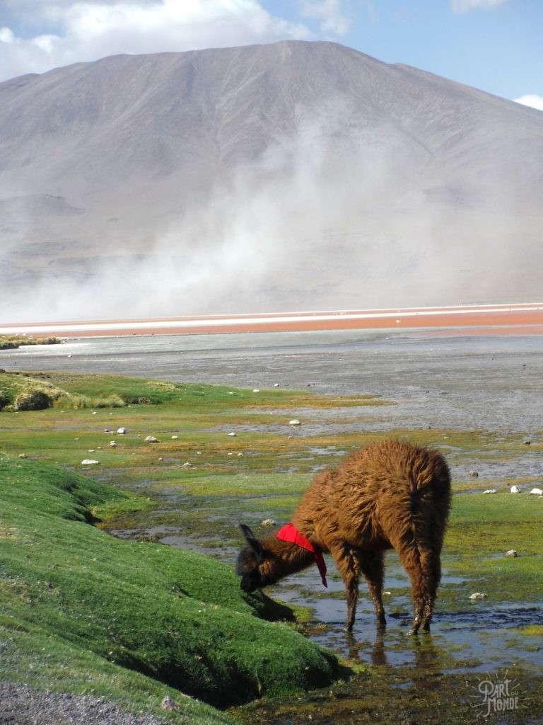 laguna colorada laguna colorada salar uyuni et sud lipez