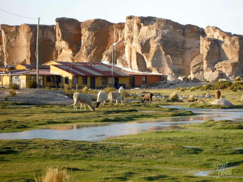vilamar alpaga laguna colorada salar uyuni et sud lipez
