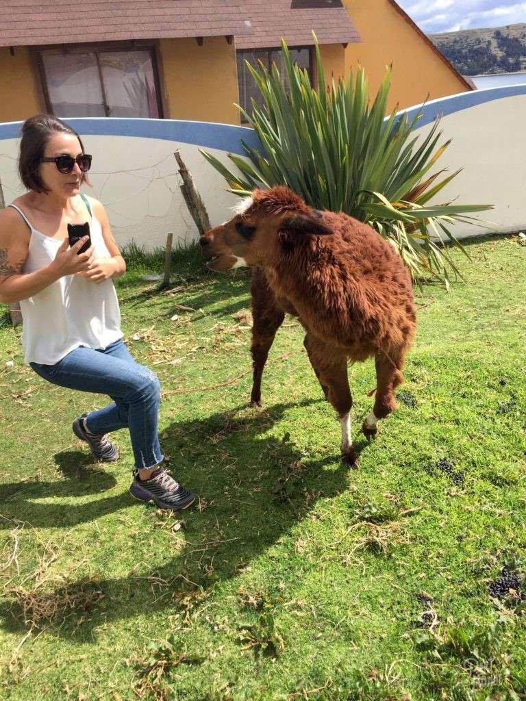 alpaga attaque copacabana