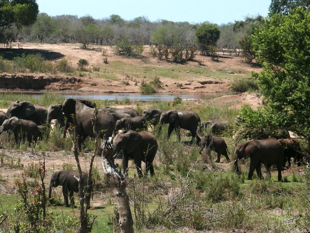 éléphants parc kruger riviere