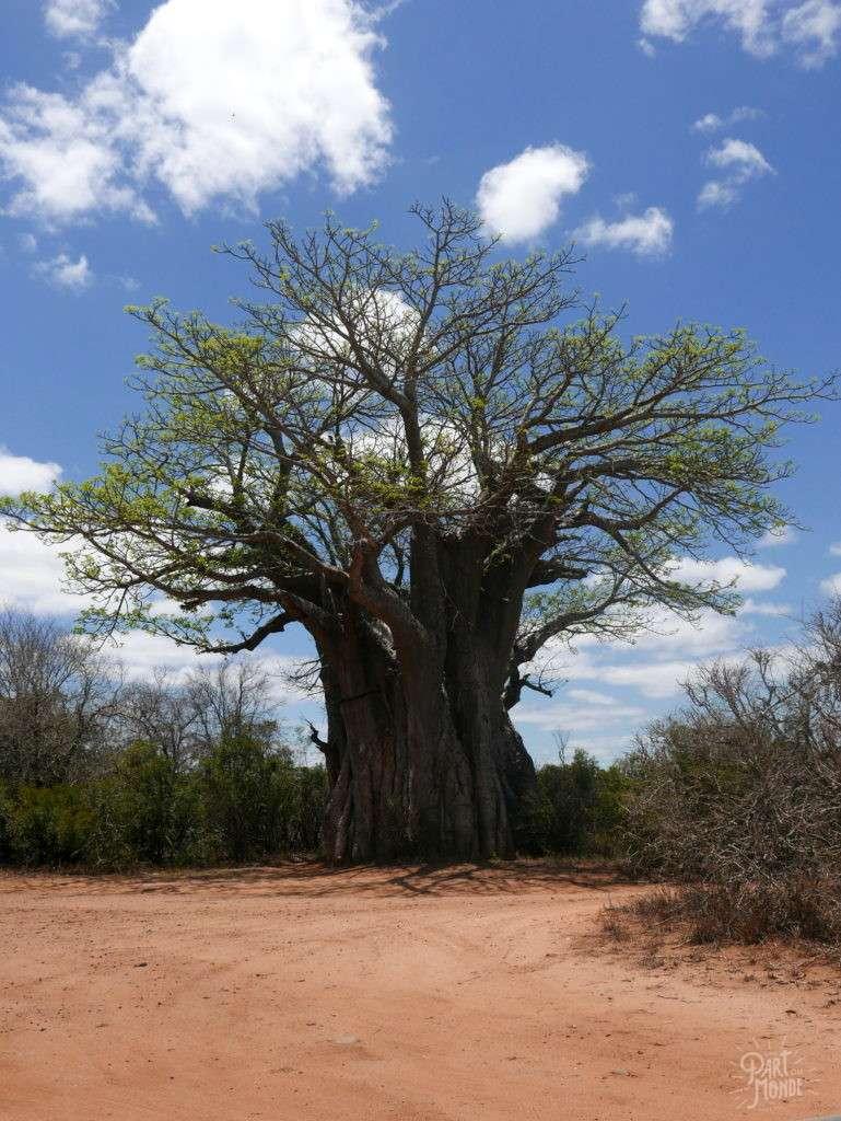 baobab parc kruger