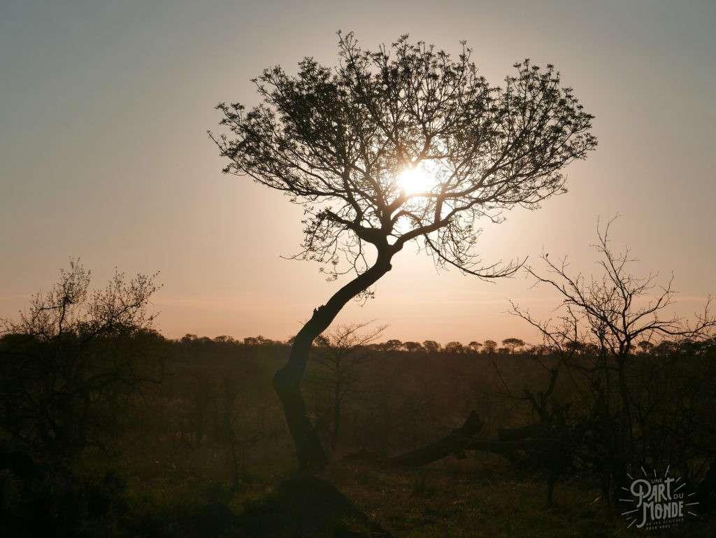 coucher de soleil parc kruger