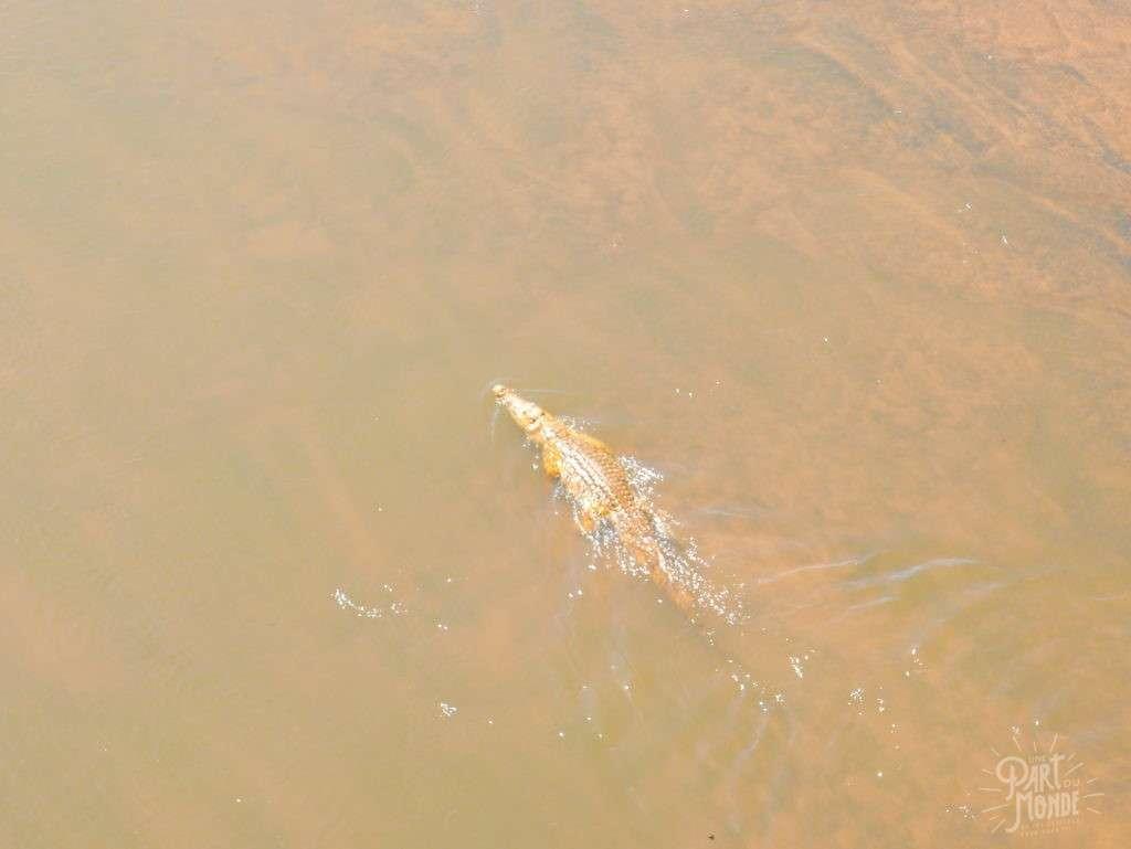 crocodile parc kruger