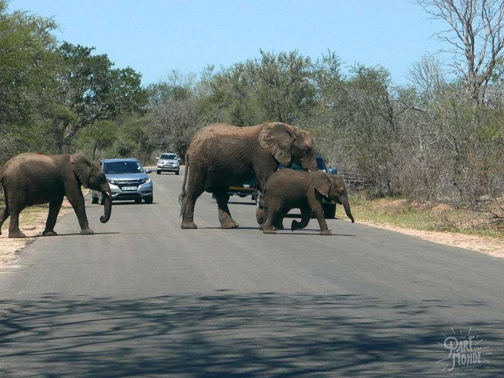 elephant route parc kruger