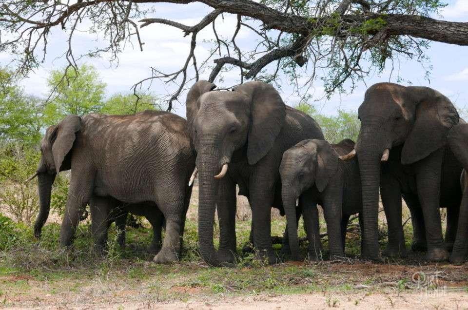 Afrique du sud-3 jours de safari en self-drive au Parc Kruger