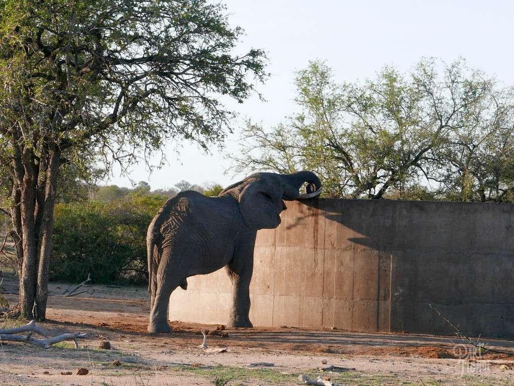 parc kruger reservoir elephant