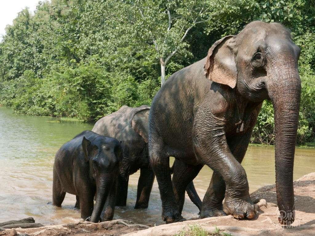 retour de mon tour du monde elephant conservation center