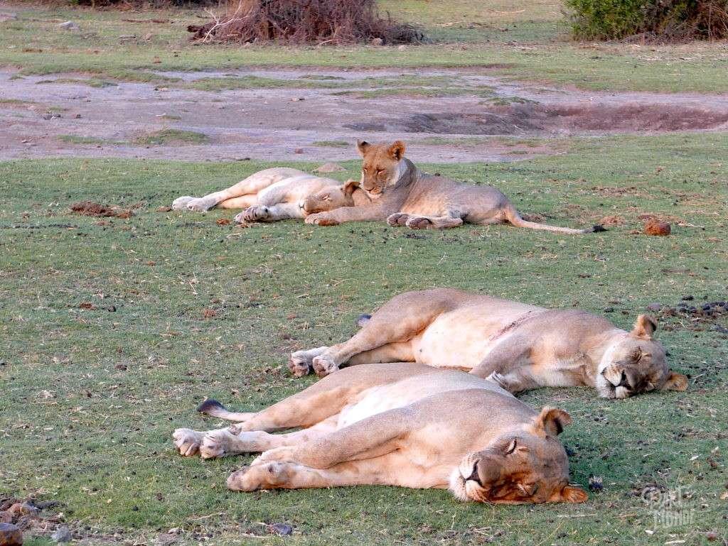 lionne madikwe