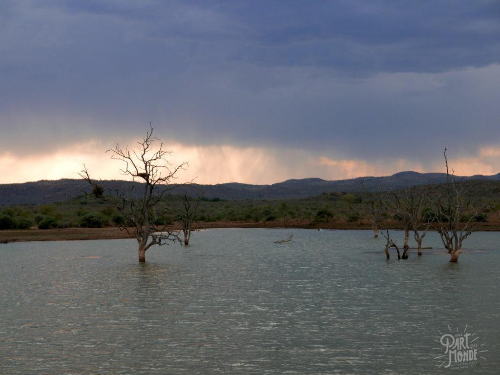 madikwé lac