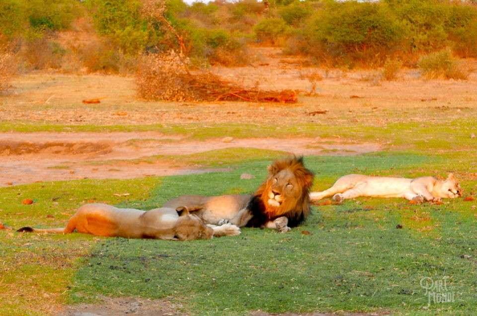 Madikwe Game Reserve : mes plus beaux safaris d'Afrique du sud