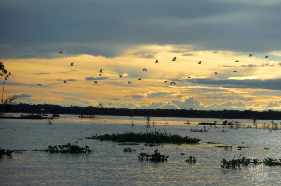 Amazonie péruvienne : 3 jours de rêve dans la forêt amazonienne