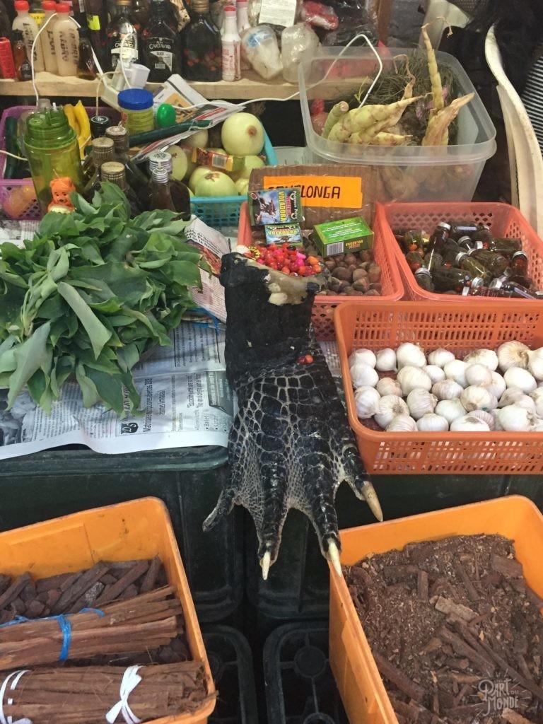 patte alligator marché belen