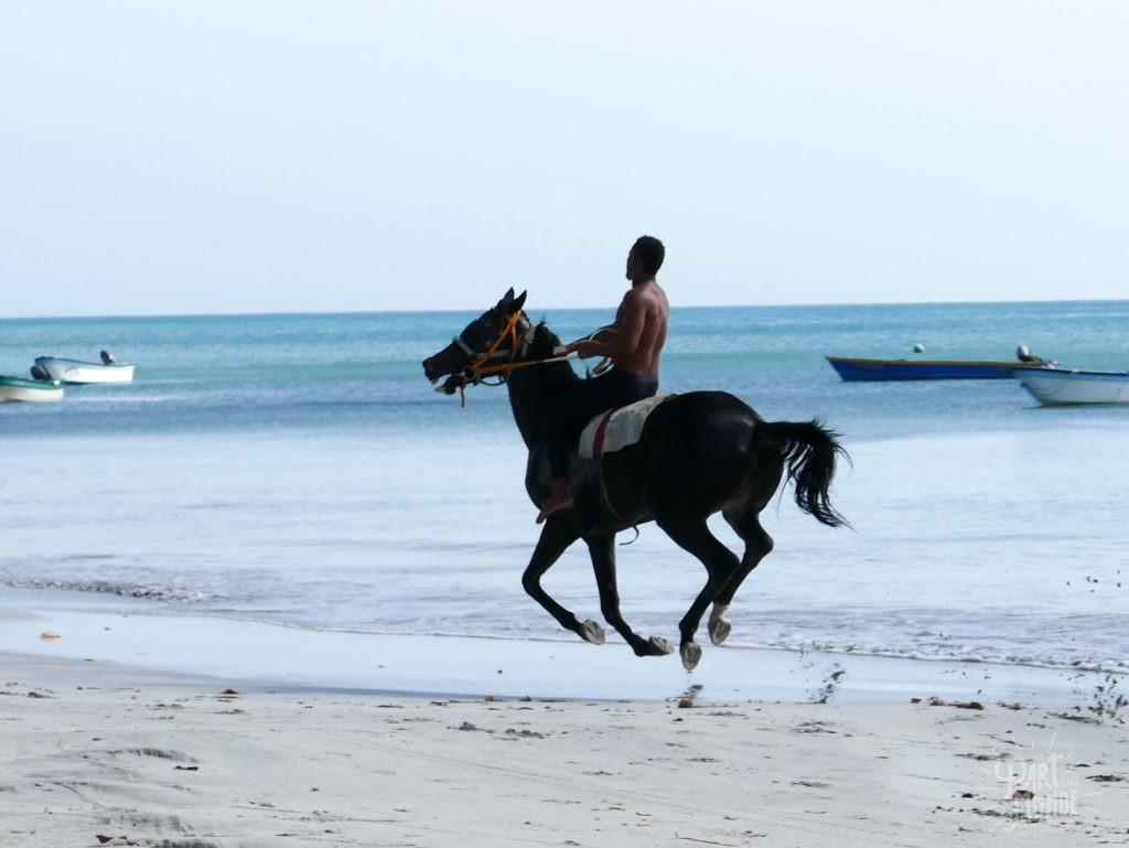 cheval course plage providencia