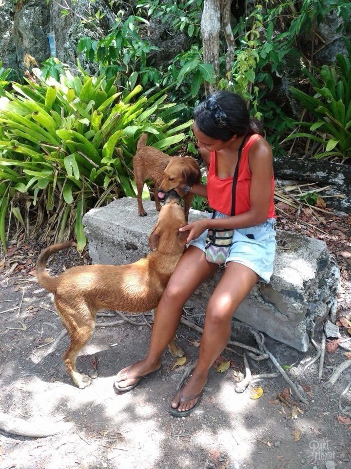 chien isla catalina