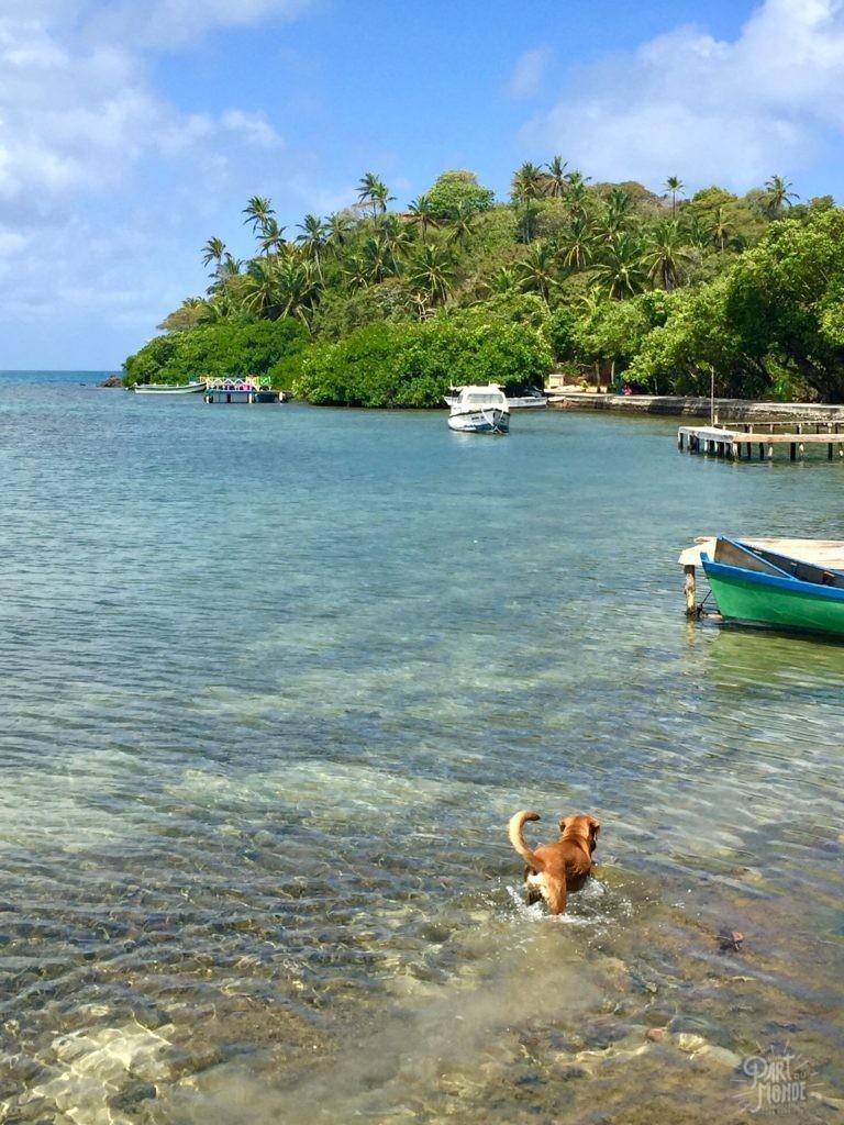 chien mer isla catalina