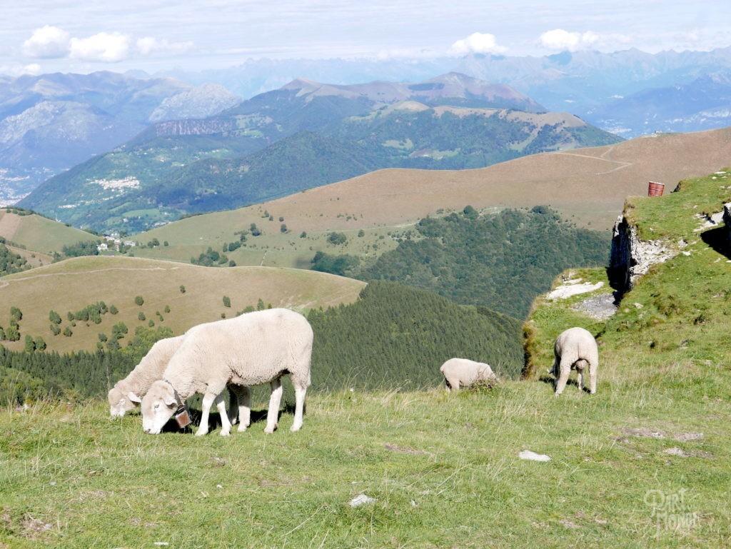 mouton monte generoso